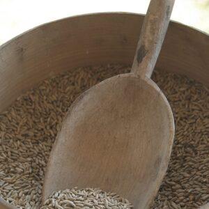 Termelői rozs otthoni őrléshez, csíráztatáshoz 8kg (372,50Ft/kg)